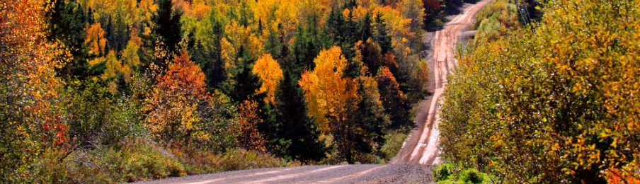 Autumn woods dirt road in New Brunswick Canada