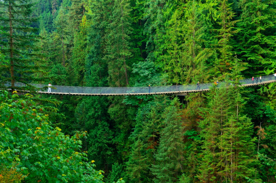 Capilano Suspension Bridge in Vancouver, CA