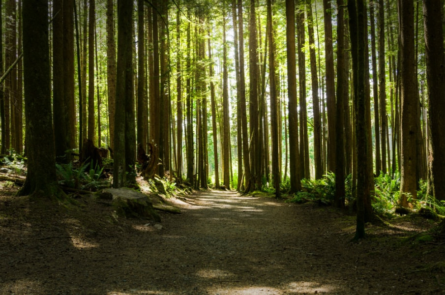 Forest at Sooke
