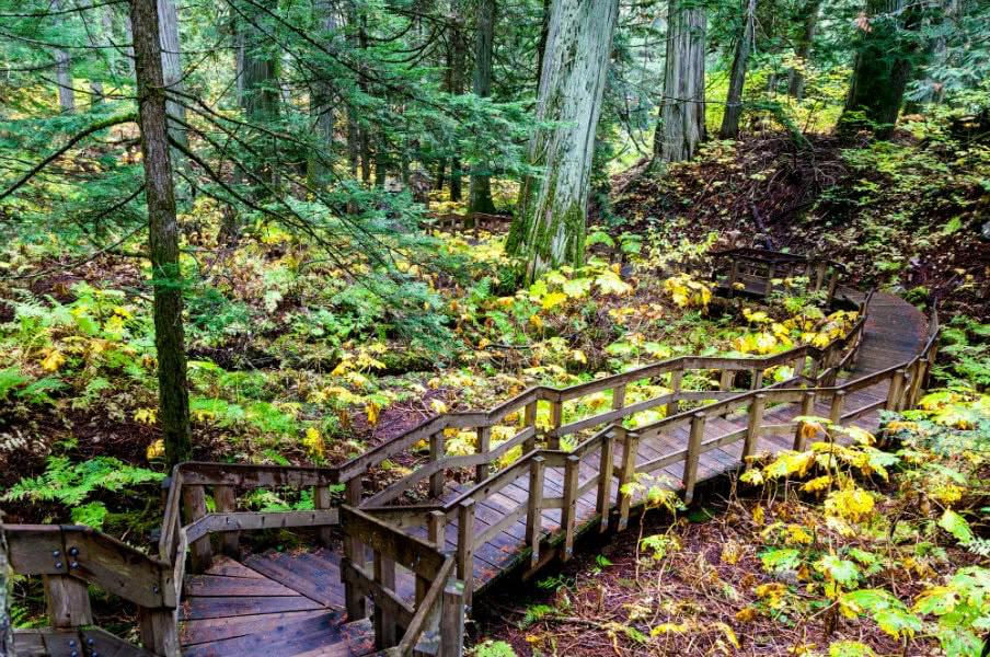 Giant Cedars boardwalk, British Columbia