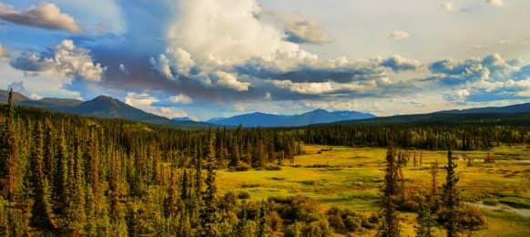 Wilderness views in summer, Whitehorse, CA